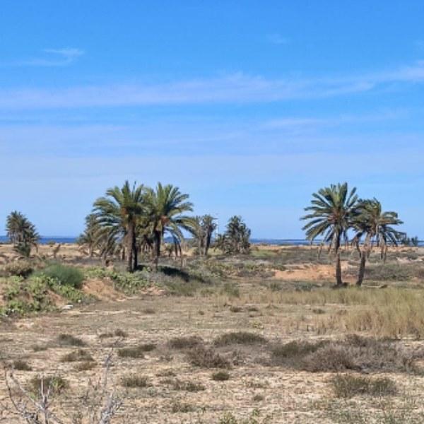 Unique terrain disposant d'une vue mer dégagée en zone résidentiel